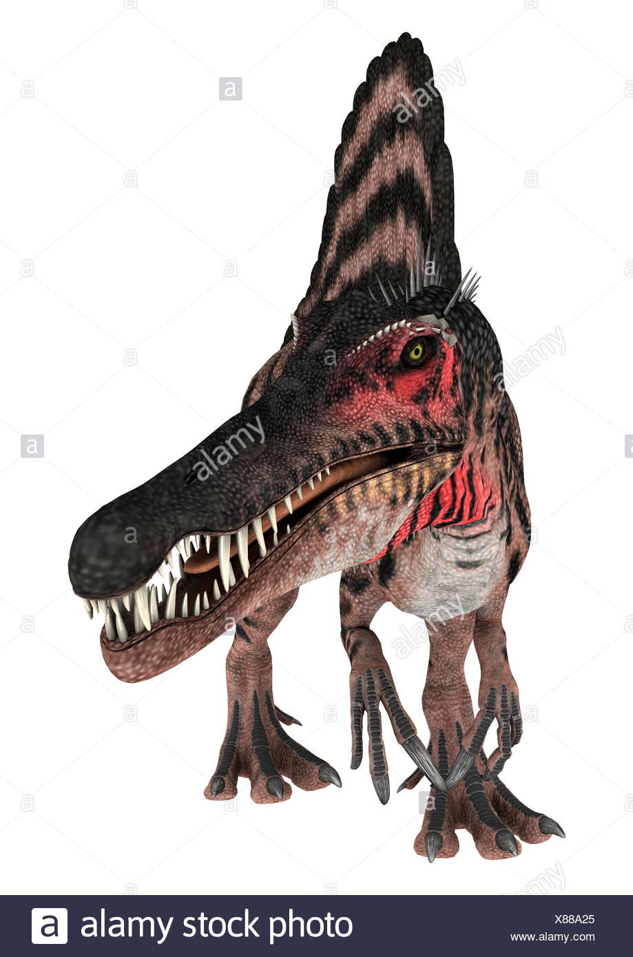 3D Rendering Dinosaur Spinosaurus on White - Stock Image