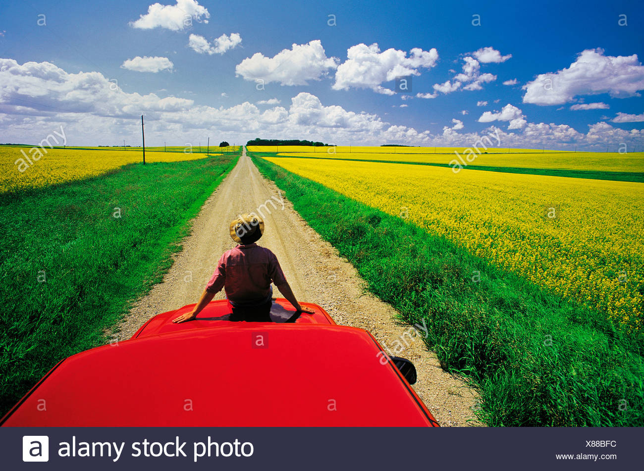 A man sits on the front of his truck overlooking a country road with blooming canola fields, Tiger Hills, Manitoba, Canada - Stock Image