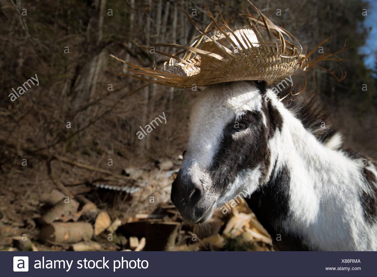 Donkey with Summer Hat - Stock Image