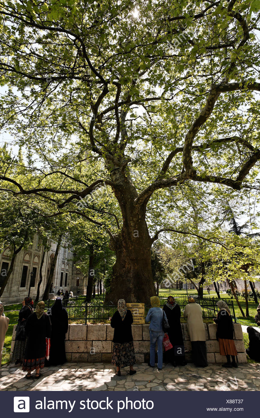 Women, Muslima, praying at a tomb under a mighty tree, Prince mosque Sehzade Camii, Istanbul, Turkey Stock Photo