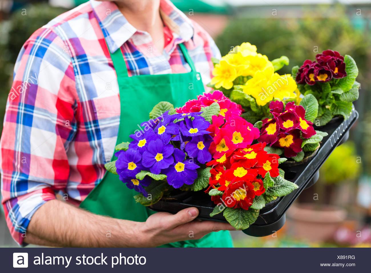 flower flowers plant gardener market-garden floriculture florist man humans human beings people folk persons human human being - Stock Image