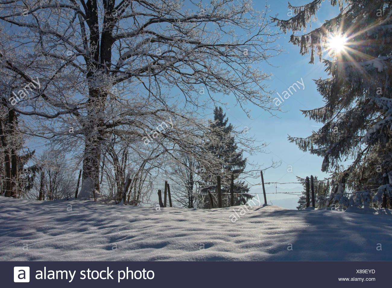 winter scenery, Germany, Bavaria, Oberbayern, Upper Bavaria - Stock Image