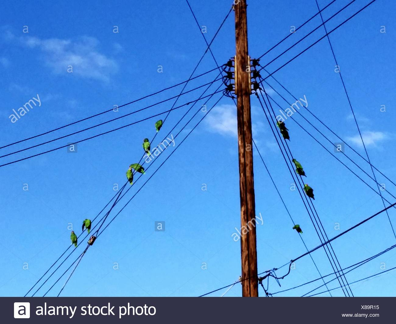 Flock Of Birds Perching On Power Cables Stock Photo