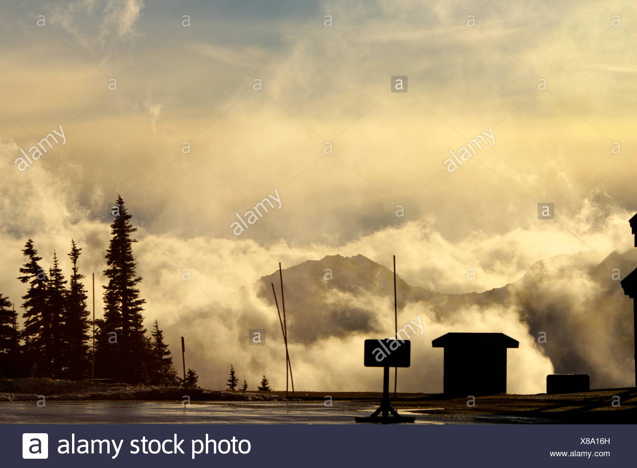 Surface Level Of Trees Against Cloudy Sky - Stock Image
