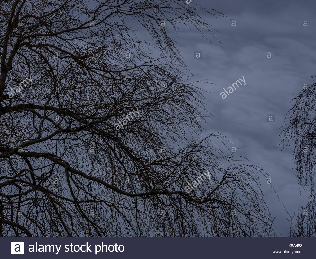 Leafless tree - Stock Image