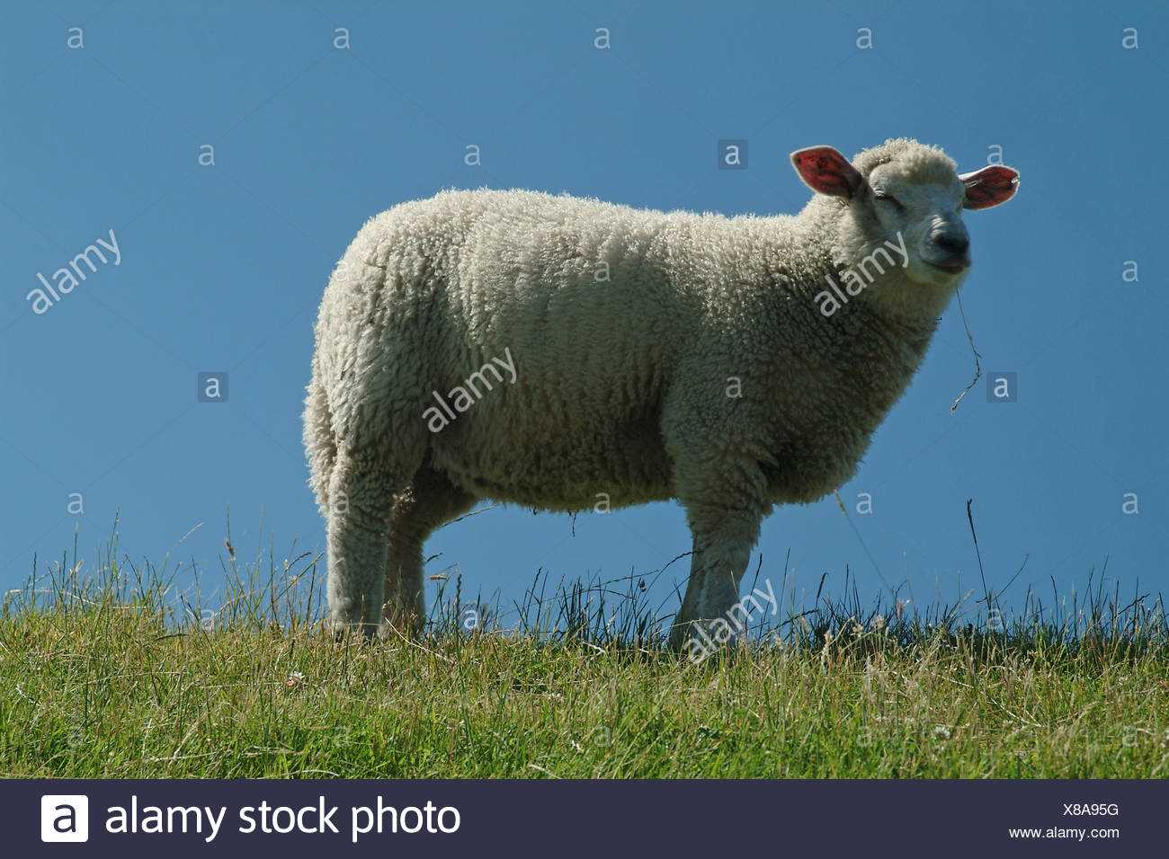 Death Of Farming Stock Photos & Death Of Farming Stock Images - Alamy