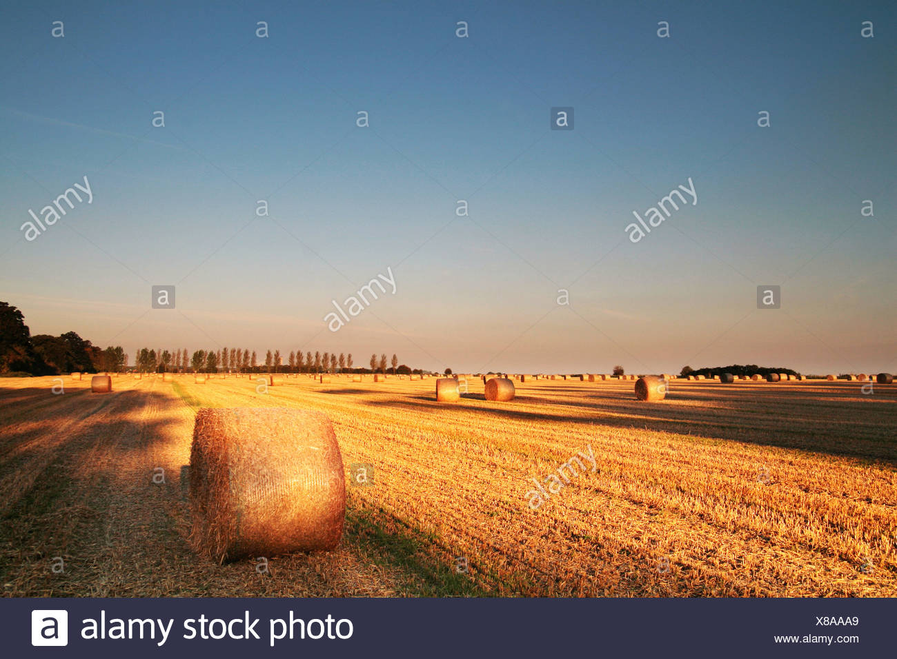 round hay bales in a field at sunrise - Stock Image