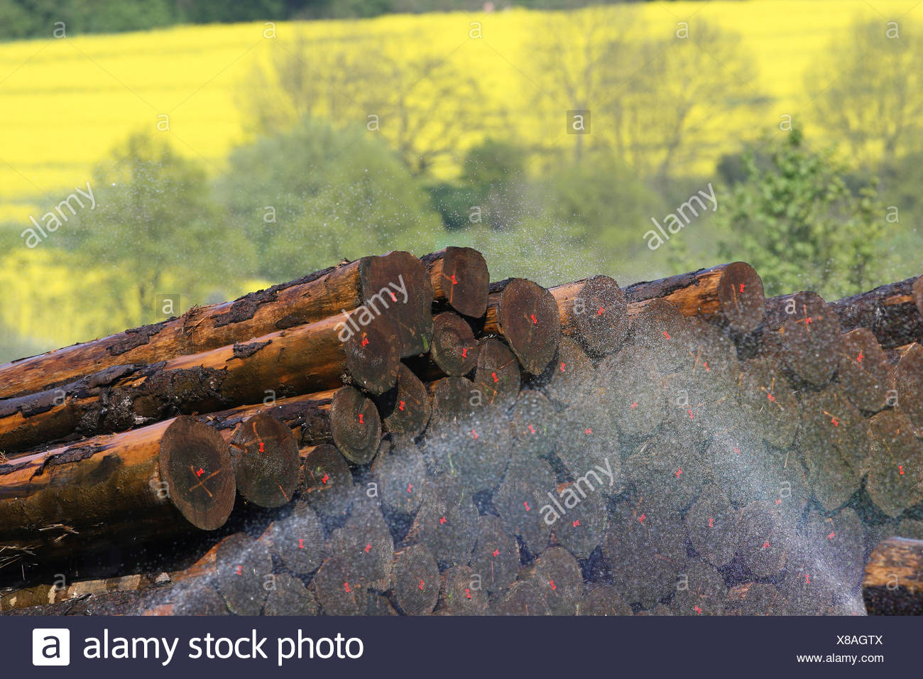 watering of timbers, Germany, North Rhine-Westphalia - Stock Image