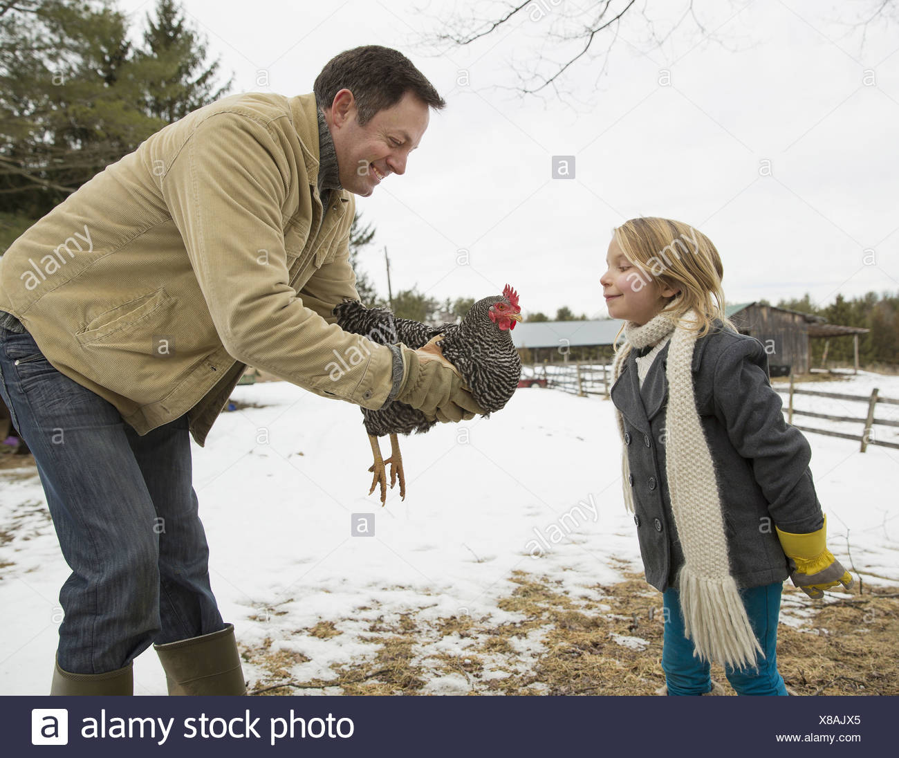 A man holding a chicken in his hands A girl leaning forwards Farm in the snow - Stock Image