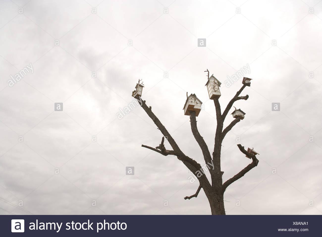 Birdhouses on tree against overcast sky - Stock Image