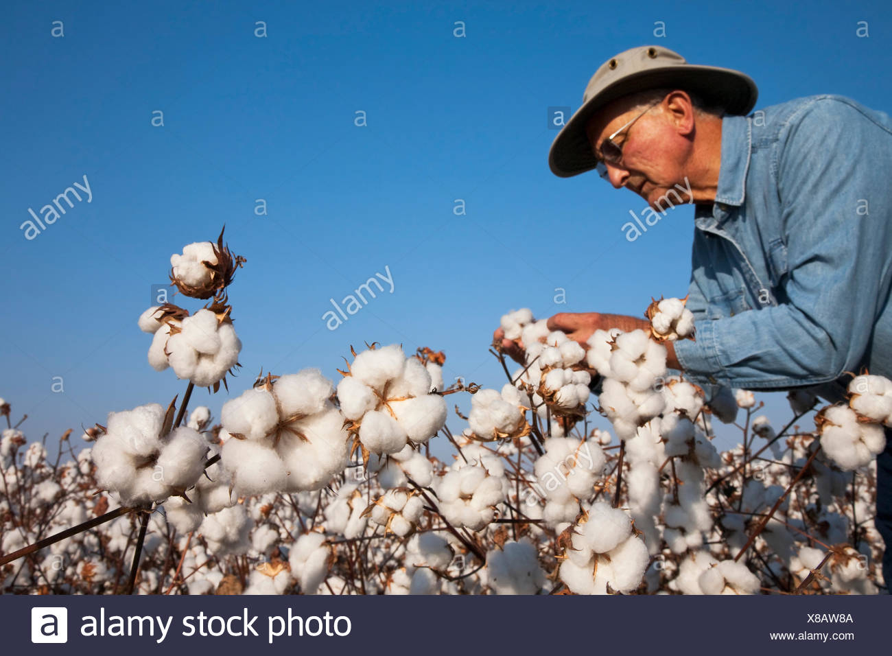 Bill,Ag,Agriculture,Agricultural,Abundant - Stock Image