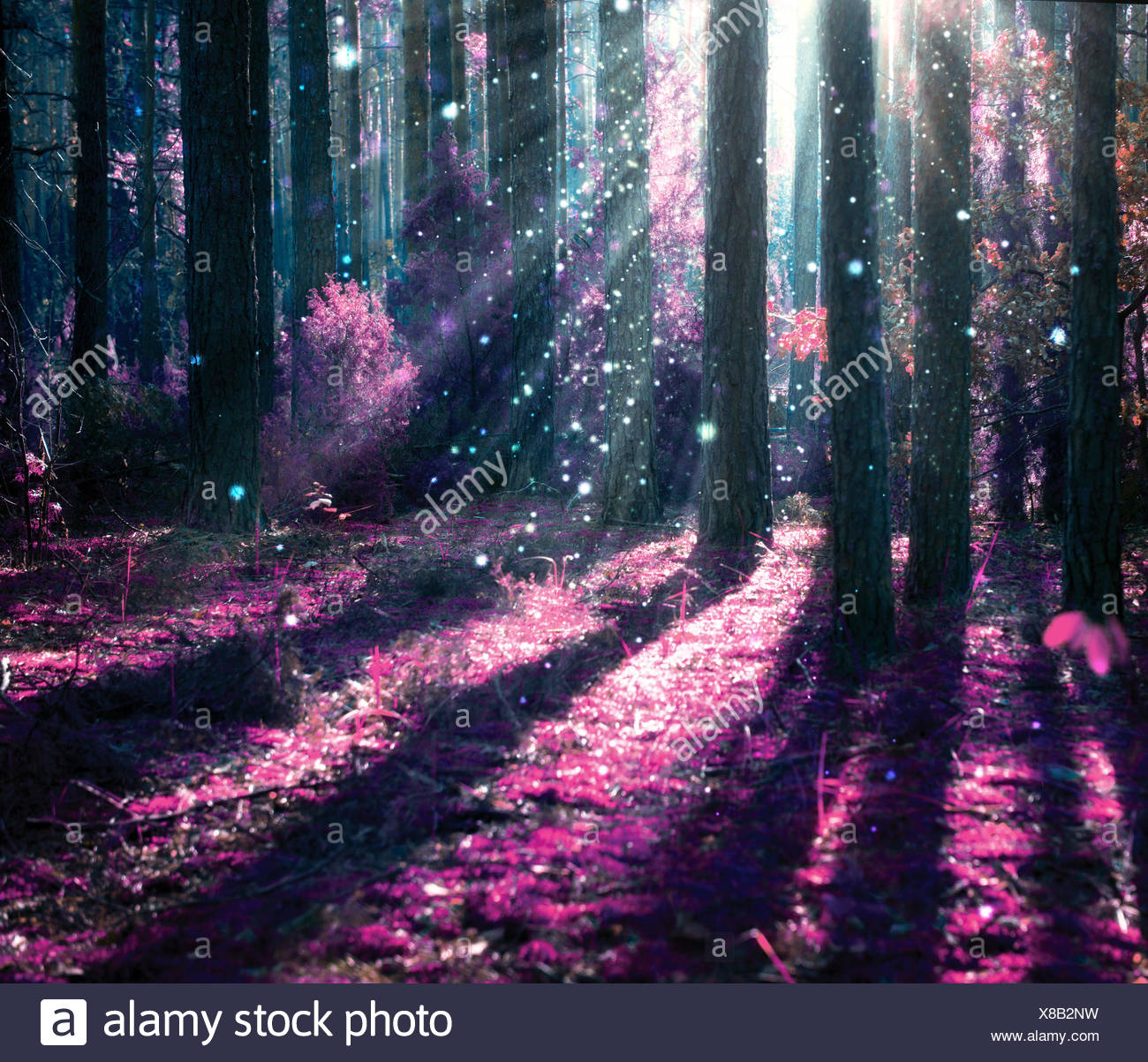 Fantasy Landscape. Mysterious Old Forest - Stock Image