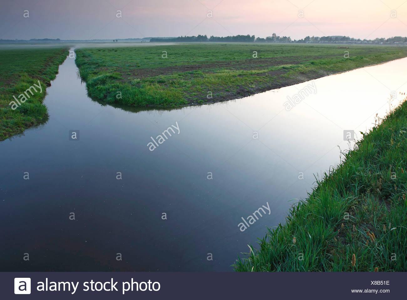 polder landscape, Netherlands, Gelderland, Nijkerk - Stock Image