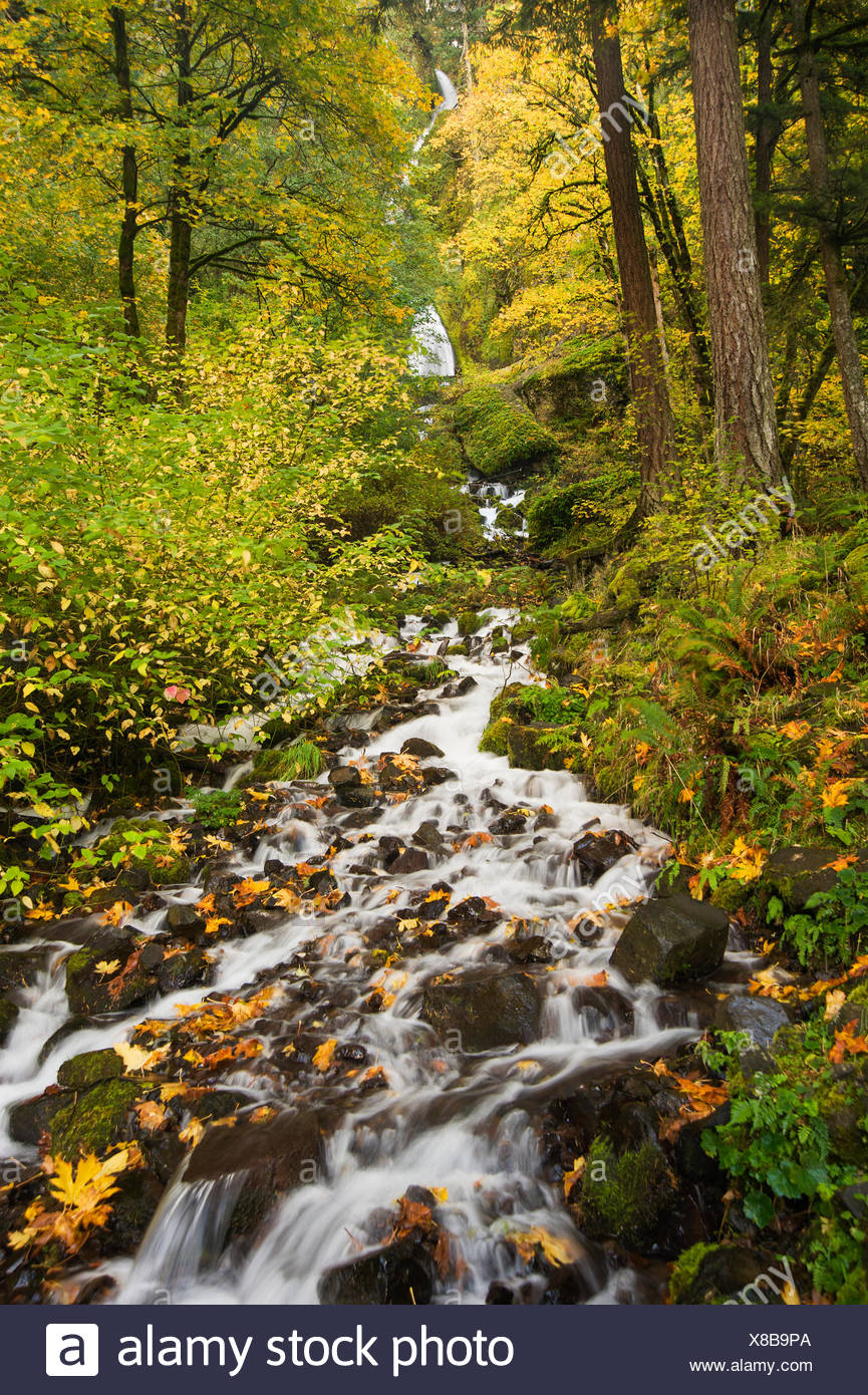 Starvation Creek Falls, the stream and view of the waterfall in the Columbia river gorge. - Stock Image