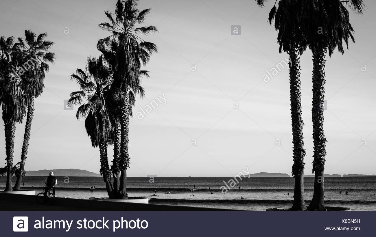 Palm trees and surfers - Stock Image