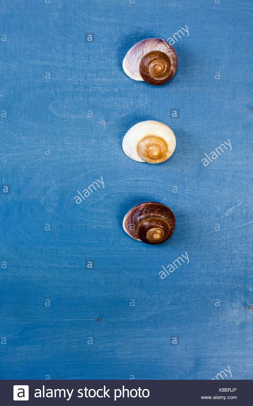 Wooden background, three snail shells, - Stock Image
