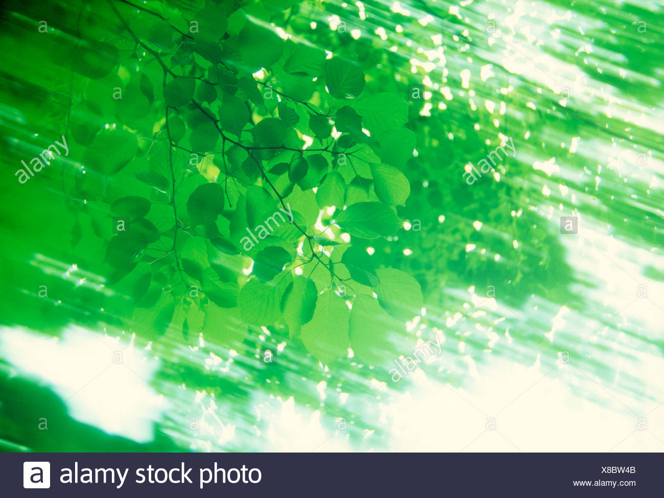 View of sunrays radiating through leaves - Stock Image