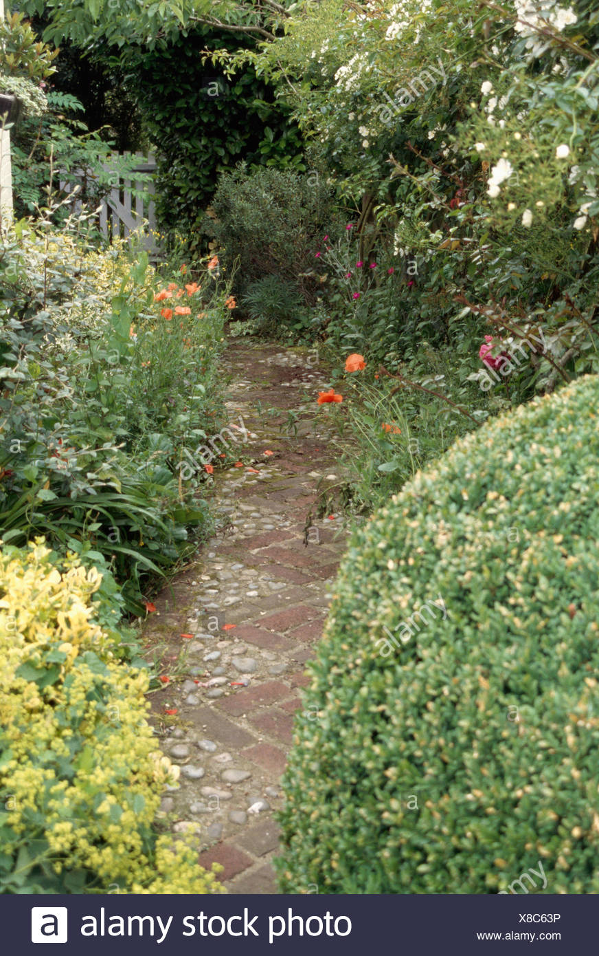 Narrow Cobble Brick Path Through Borders With Clipped Shrubs In