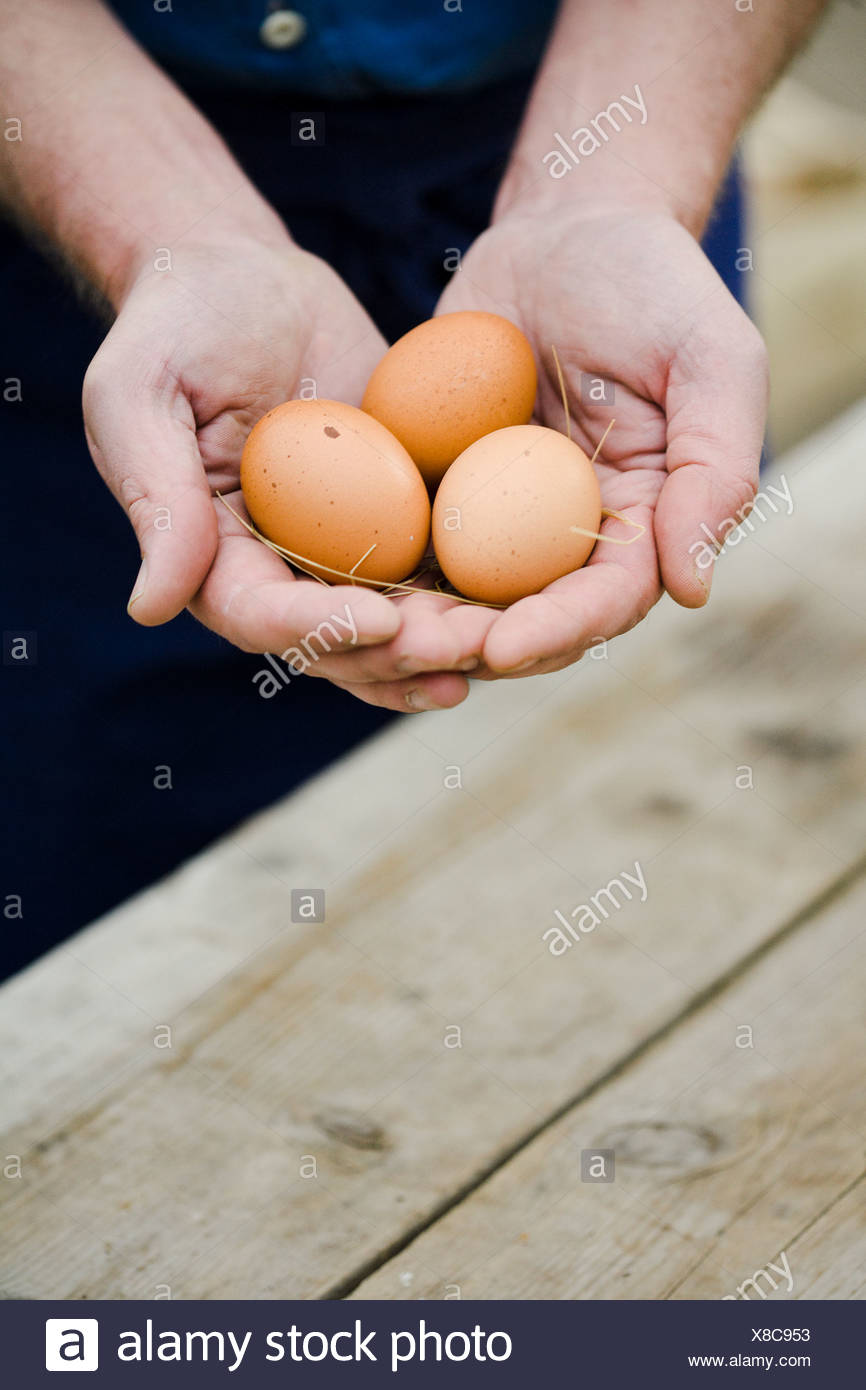 Man holding eggs in his hands. - Stock Image
