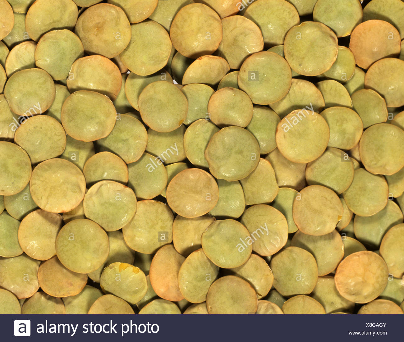 Green lentils (Lens culinaris) prepared for cooking a Canadian variety - Stock Image
