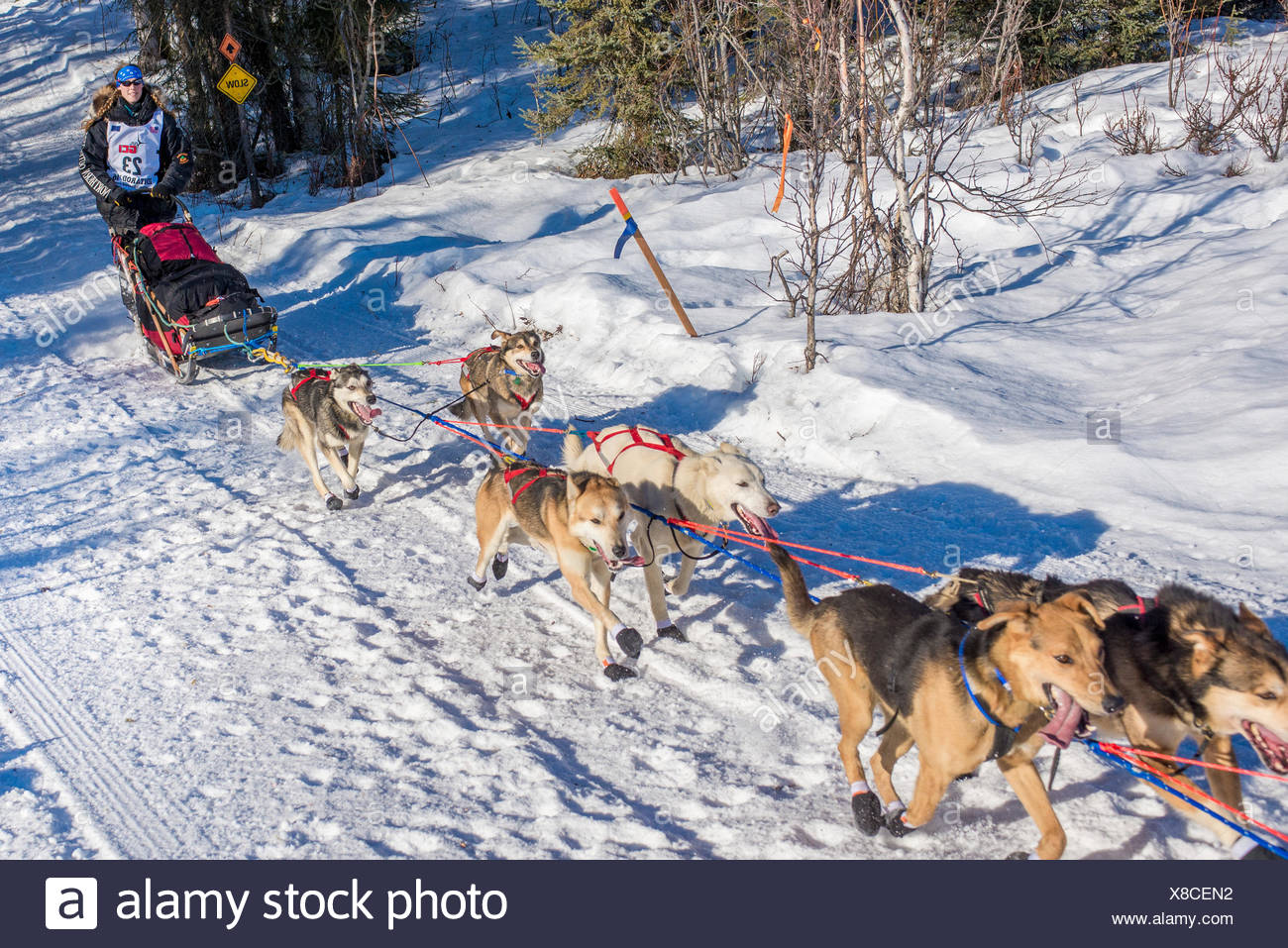 Anna Berington and team run down the trail on Long Lake shortly after leaving the re-start in Willow, Alaska during the 2016 Iditarod - Stock Image