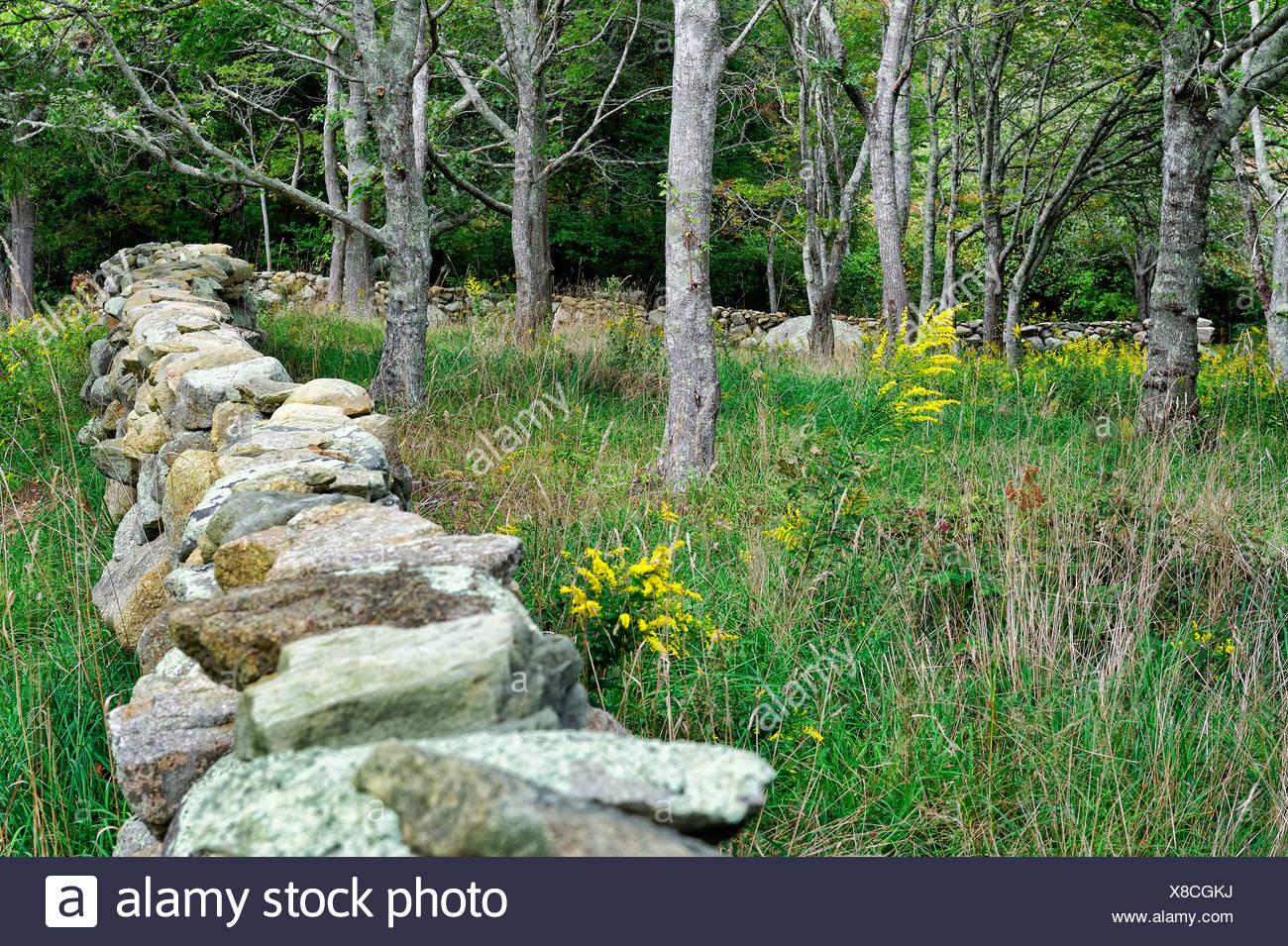 Field and stone fence, Chilmark, Martha's Vineyard, Massachusetts, USA - Stock Image