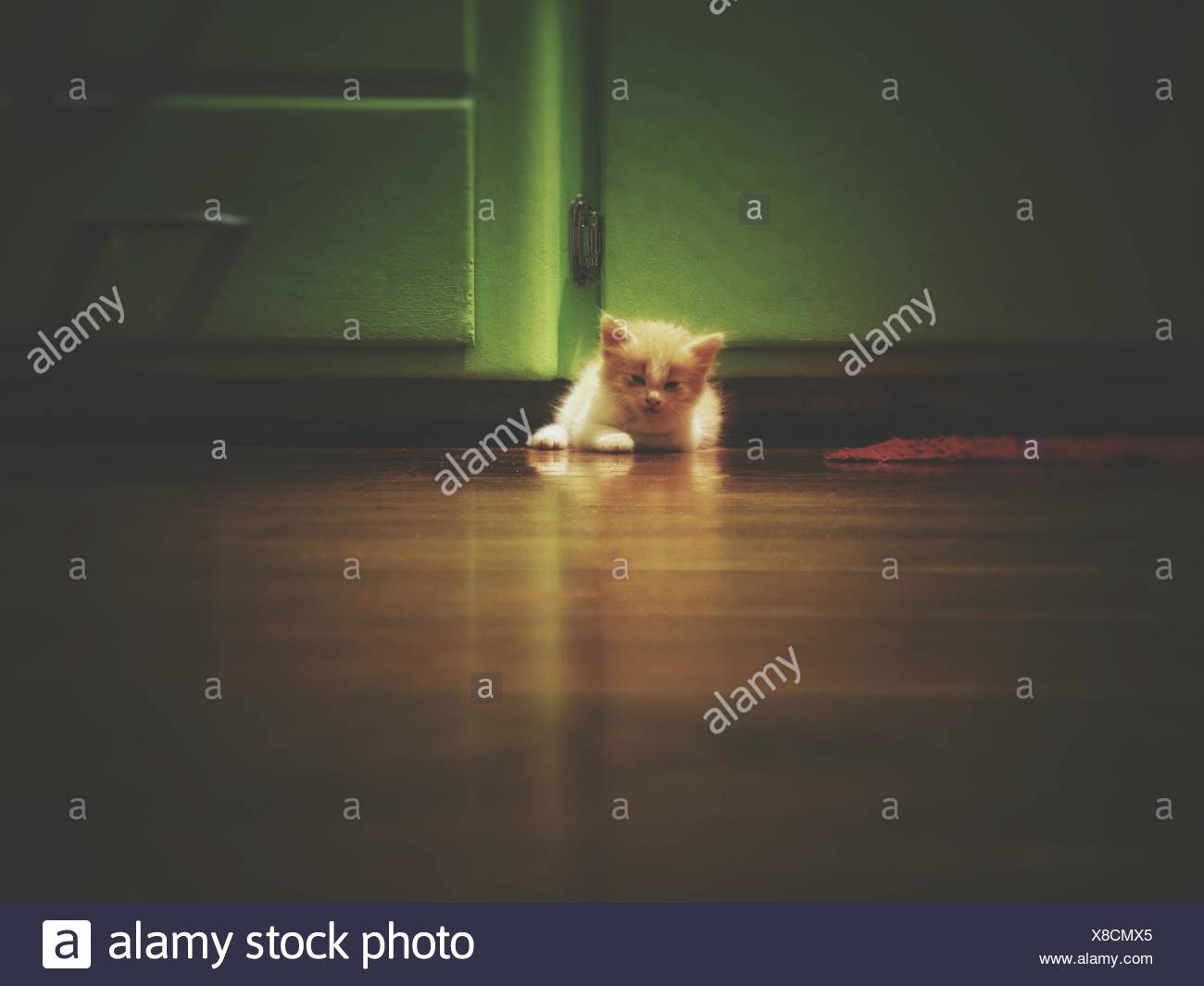 Close-Up Of Kitten On Floor - Stock Image