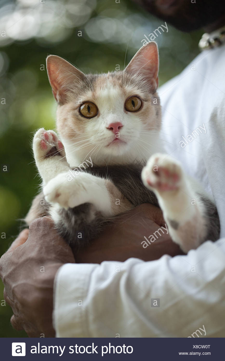 Pet cat in owners arms - Stock Image