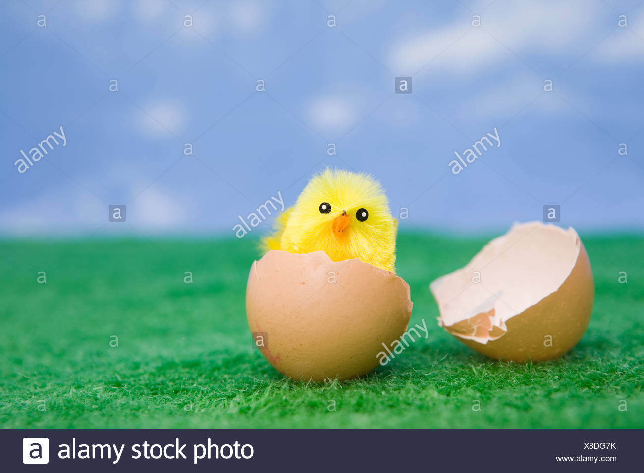 A chick hatching - Stock Image
