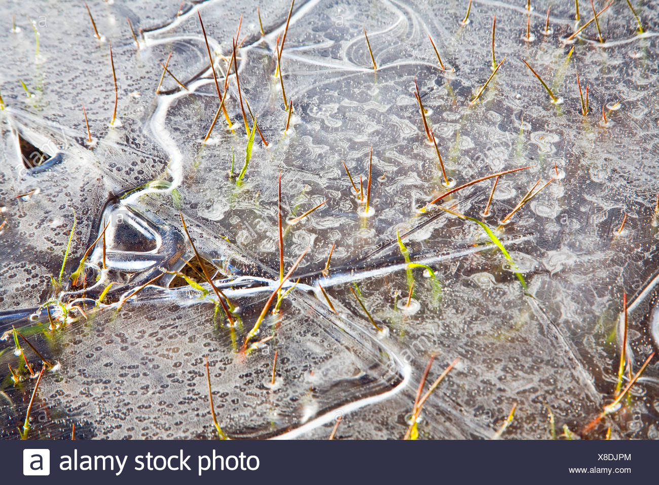 Ice On Water - Stock Image