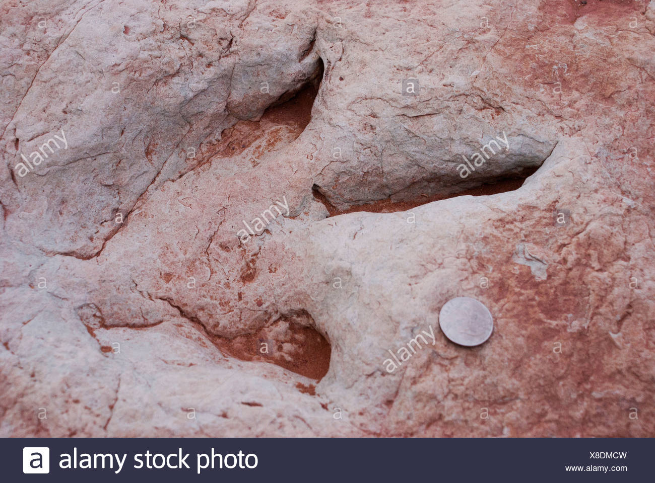 USA Arizona Dinosaur footprint preserved in former stream bed in northern Arizona - Stock Image