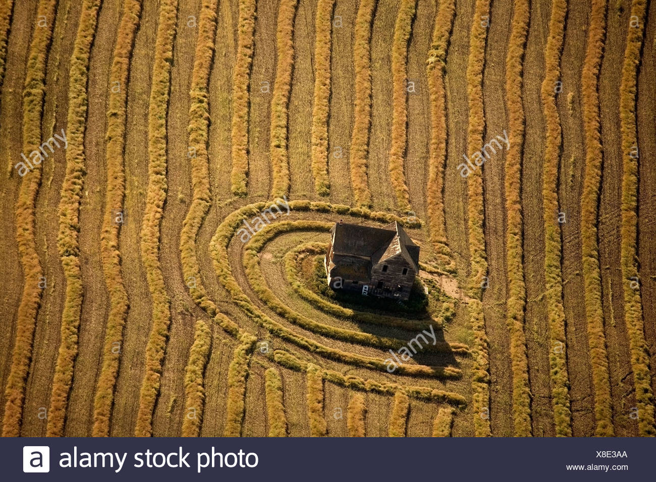 Abandoned house in field - Stock Image