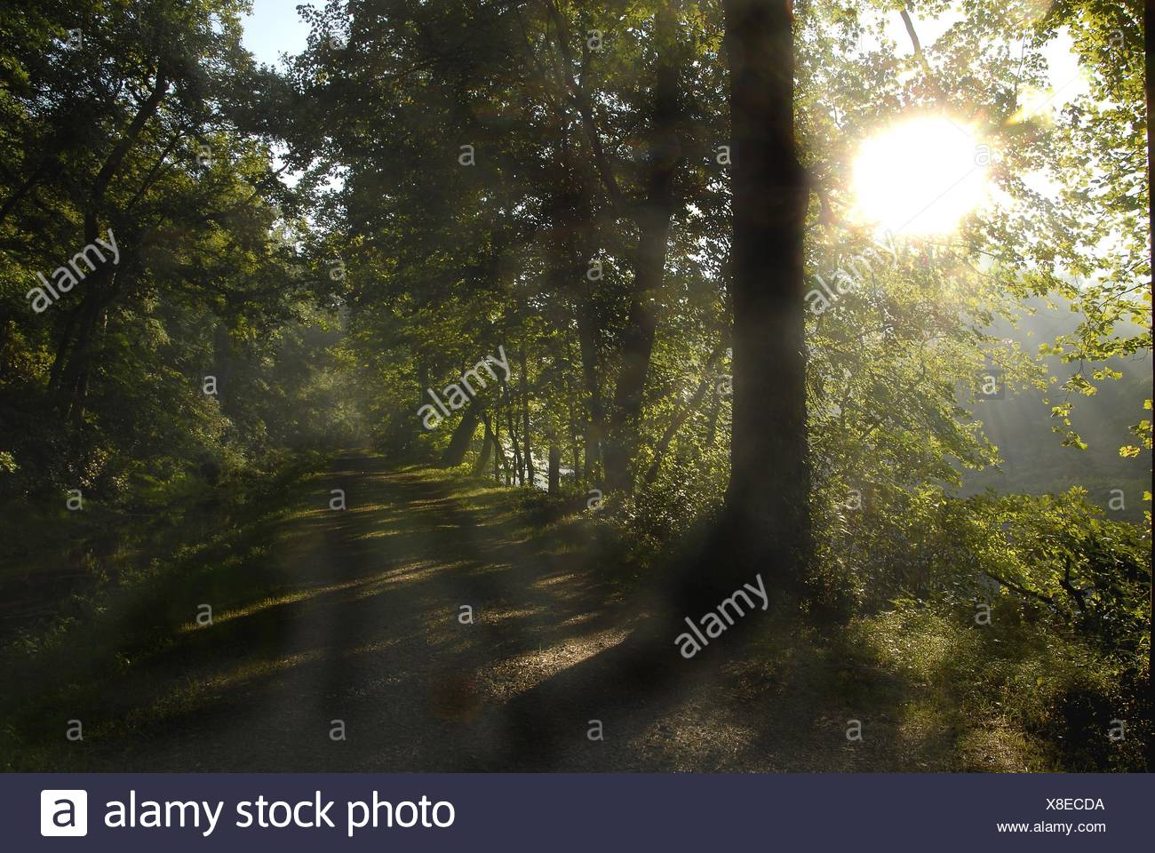 The sun bursts out over a canal path, Pennsylvanis, USA - Stock Image