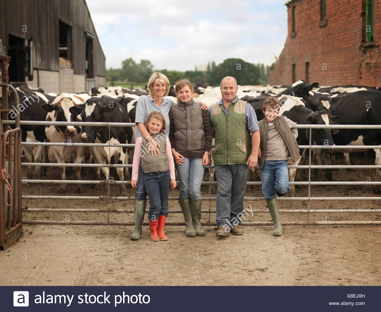 Farmer And Family With Cows - Stock Image