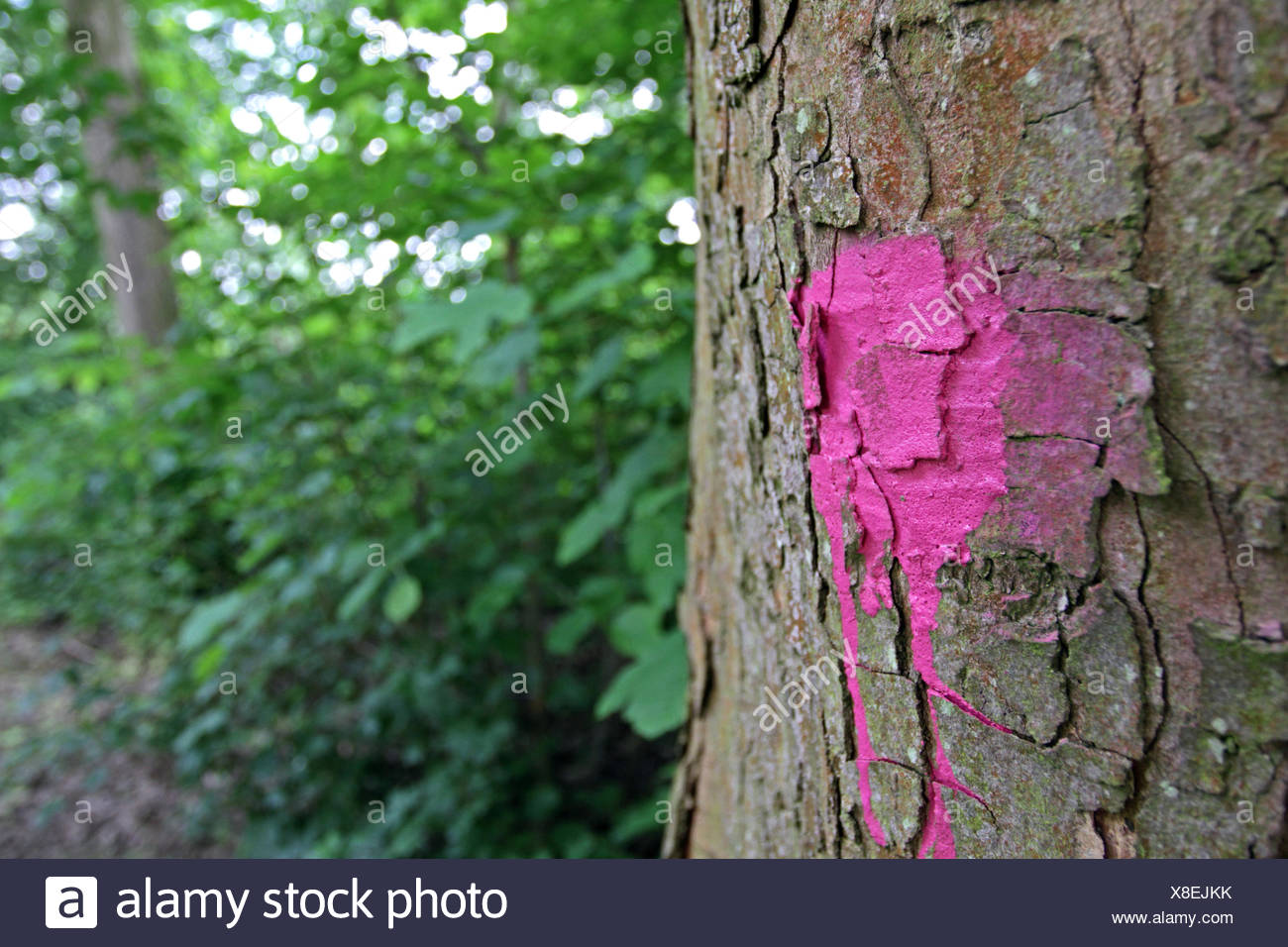 flagged tree in a park, Germany Stock Photo