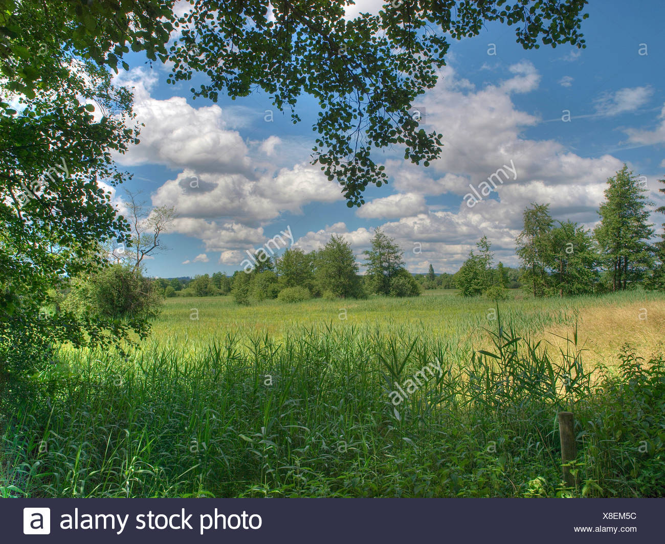 Trees, grab lake, green, nature reserve, reed, protection of birds, clouds, Switzerland, - Stock Image