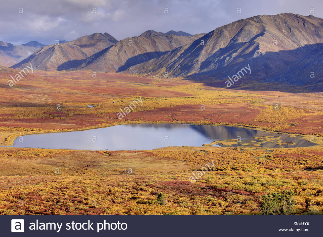 North America, Canada, Yukon territory, Yukon Territory, Dempster highway, Ogilvie Mountains, Tombstone Territorial park, lake, autumn, - Stock Image
