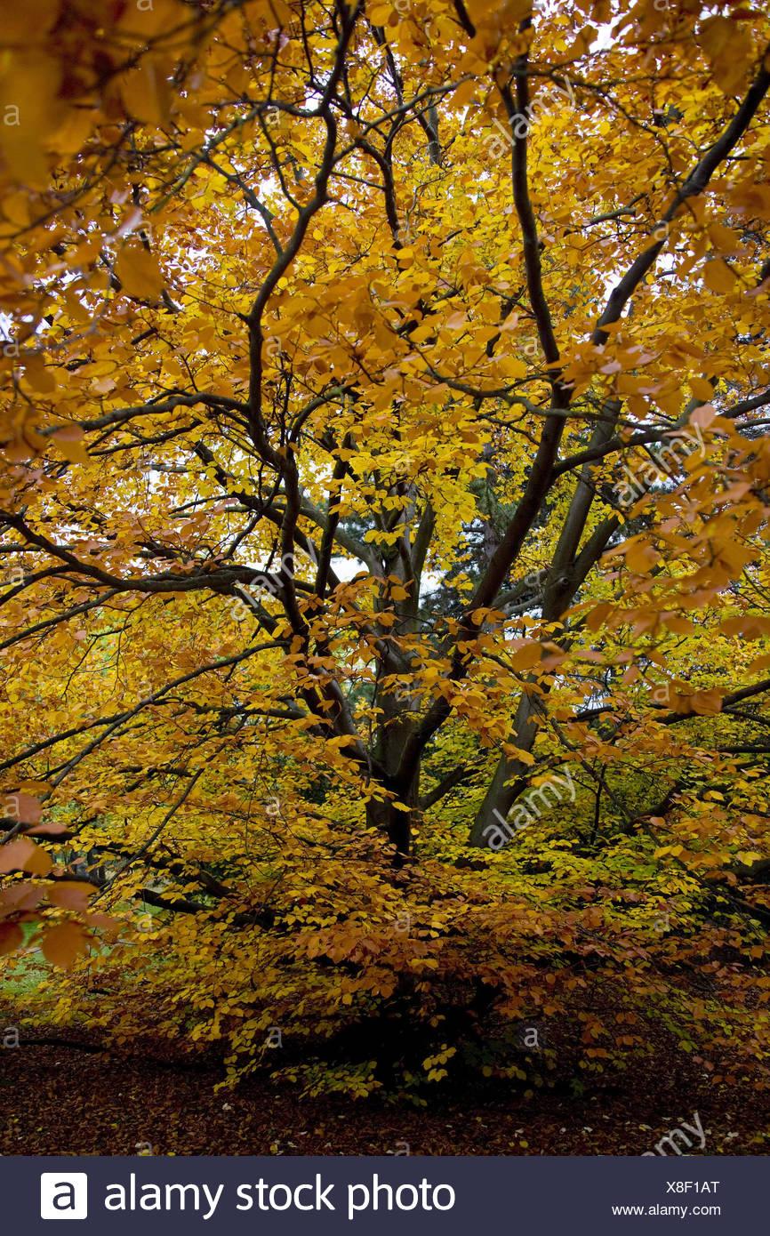Czech Republic, Prague, Letna park, broad-leaved tree, autumn, park, park, broad-leaved trees, plants, nature, leaves, vegetation, season, autumn foliage, autumnally, nobody, - Stock Image