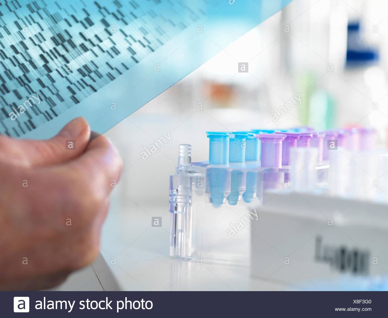 Researcher holding a DNA (deoxyribonucleic acid) gel during a genetic experiment in a laboratory - Stock Image