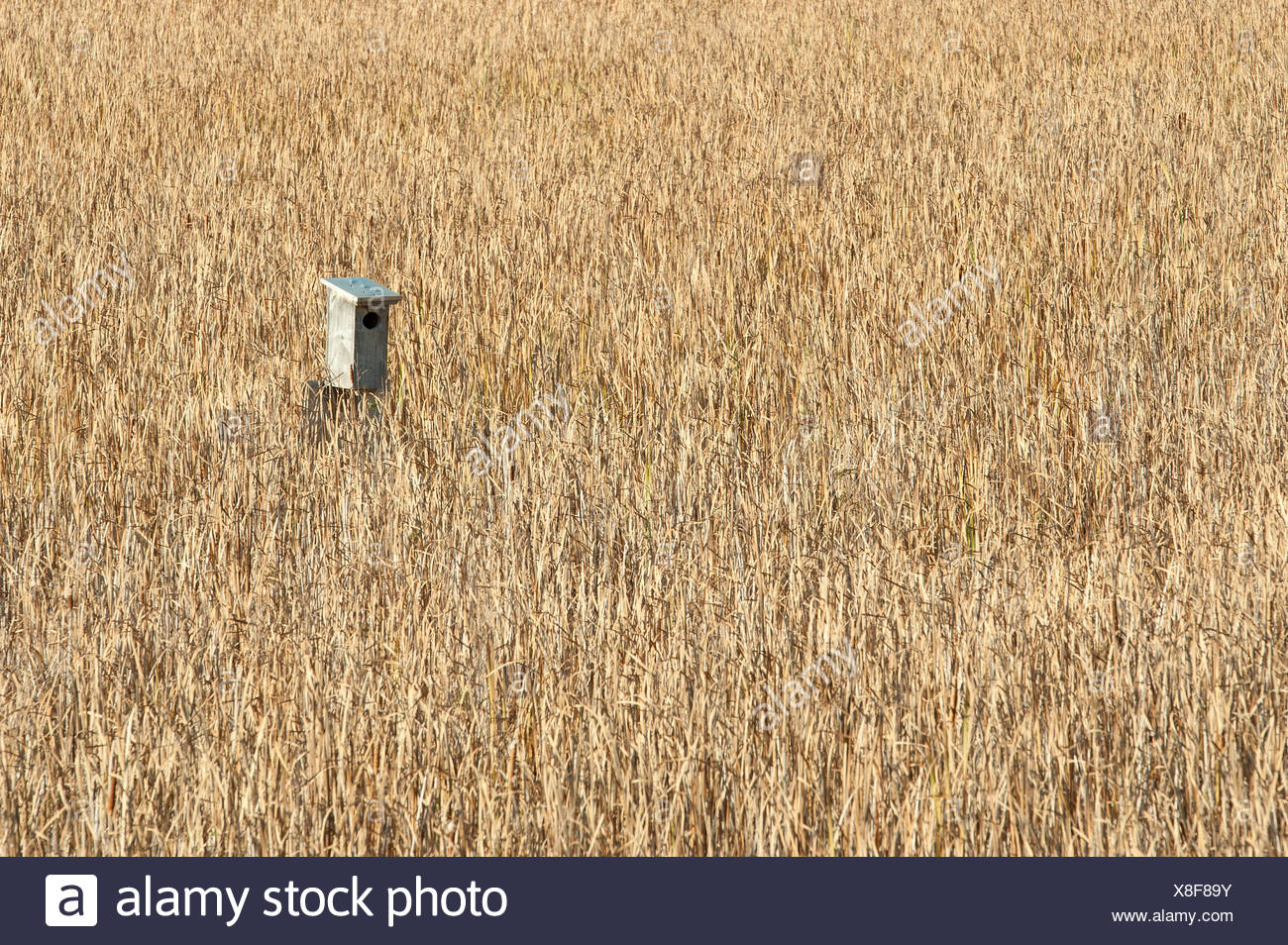 Empty nesting box in marsh, Bradford, Ontario, Canada - Stock Image