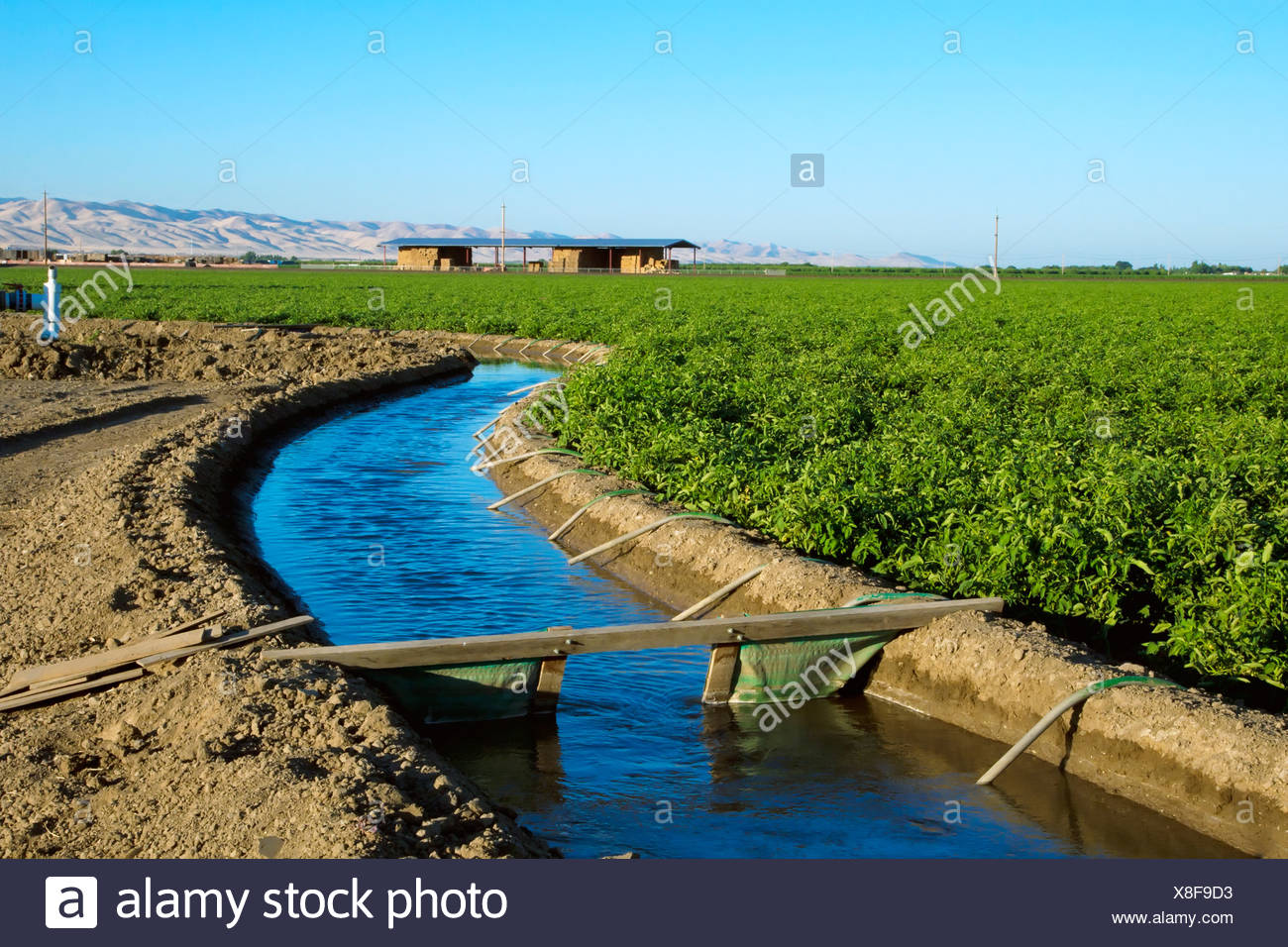 Agriculture - Irrigation canal running alongside a fresh market tomato field that is being irrigated utilizing siphon tubes. - Stock Image