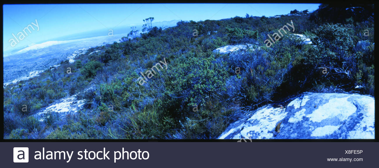 Mountain Side With Rocks And Shrubbery - Stock Image