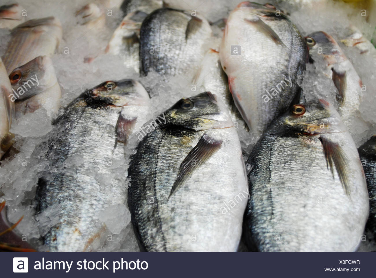 fresh cooled fishes - Stock Image