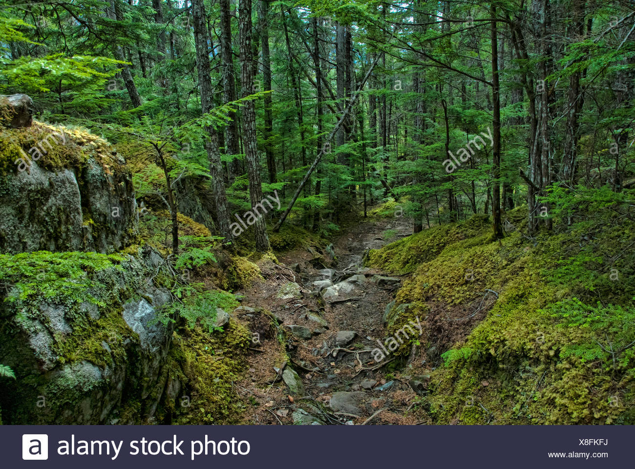 chilkoot trail, national, historic, site, skagway, Alaska, USA, United States, America, forest - Stock Image