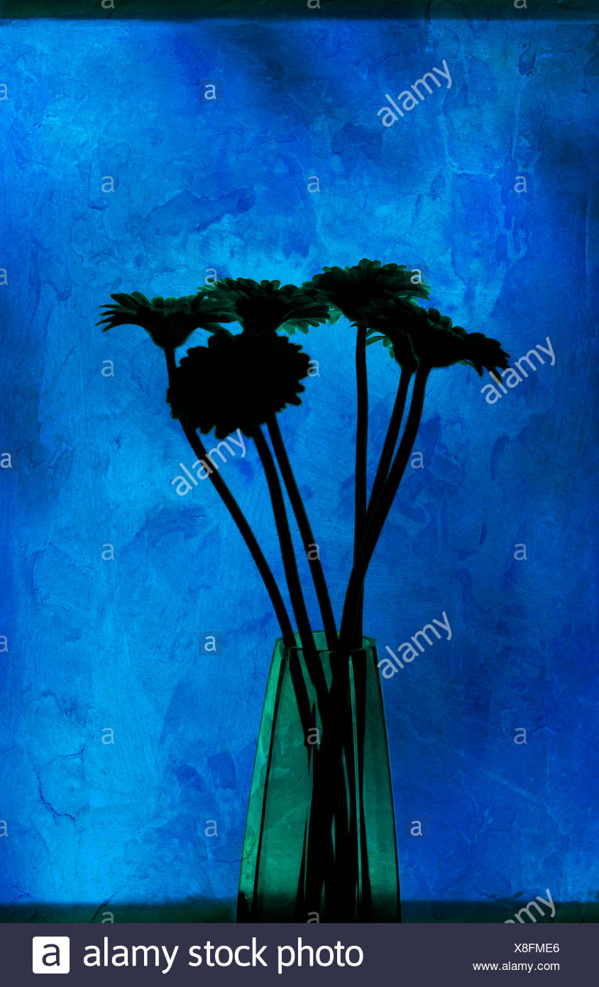 Computer-illustration of a bunch of Gerbera in a glass vase - Stock Image