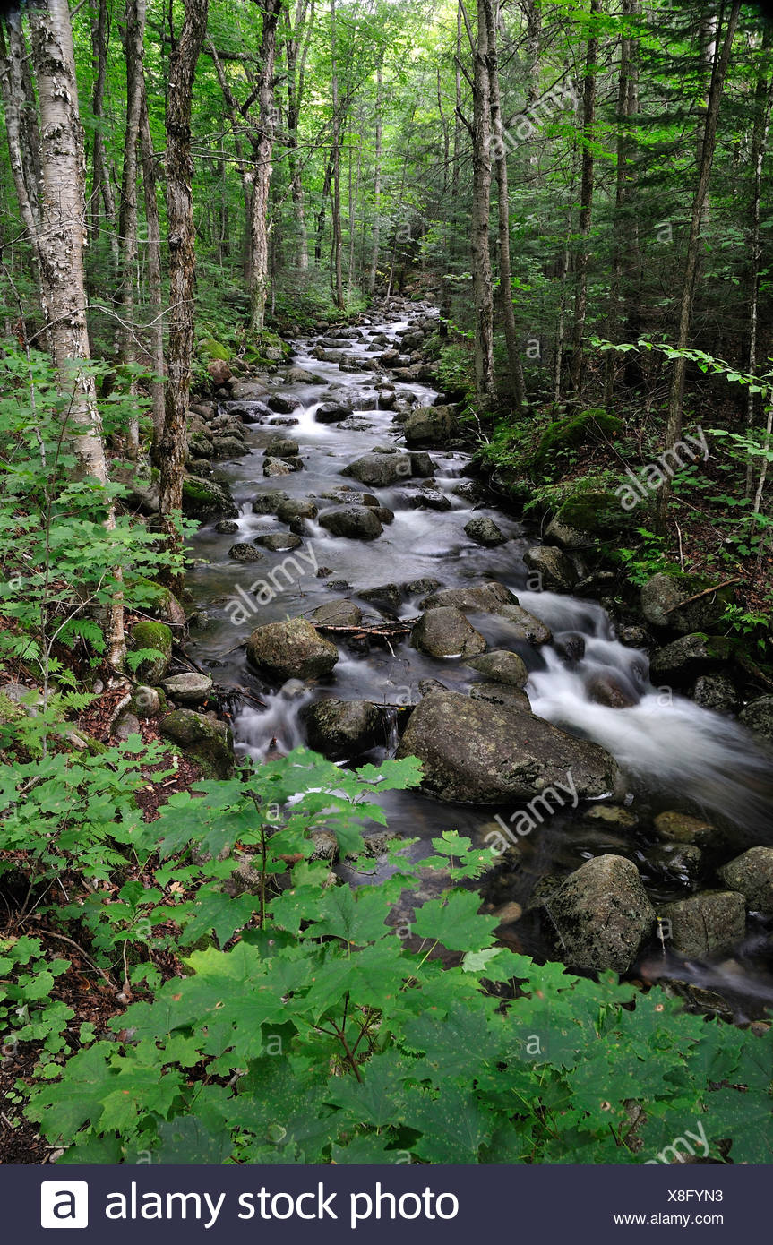 Canada, Creek, Green, National Park, Mont-Tremblant, Quebec, brushed, creek, flowing, water, forest, leaves, stream - Stock Image