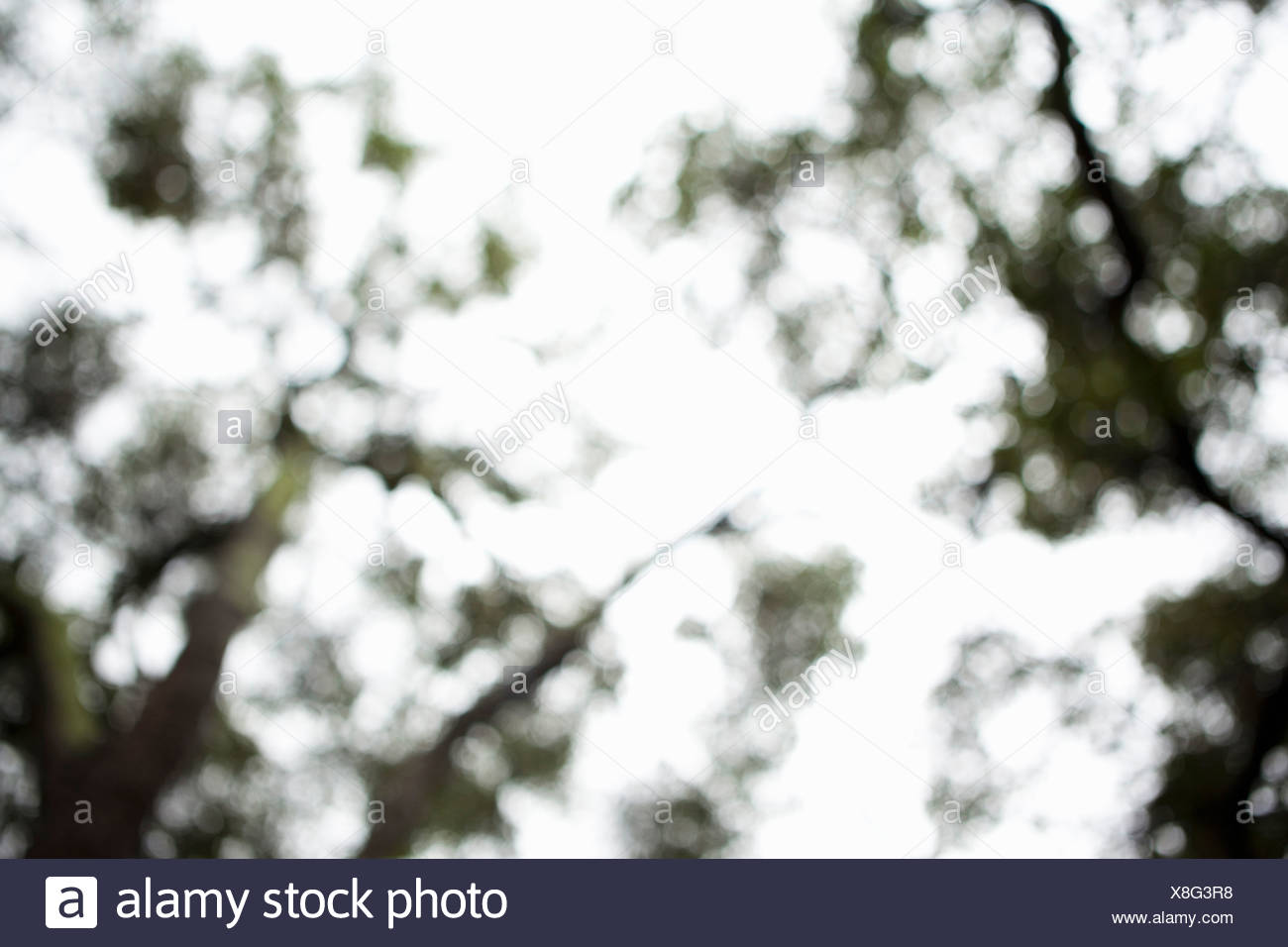 Defocussed view of tree tops - Stock Image