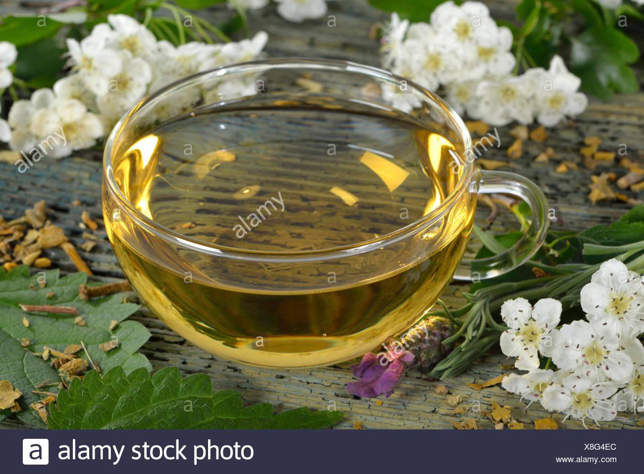 Cardiovascular tea, Mistletoe, valerian, common lavender, hawthorn herb, nettle, hibiscus / (Viscum album), (Crataegus monogyna), (Common valerian), (Urtica dioica), (Hibiscus sabdariffa), (Valeriana officinalis), ( Lavandula angustifolia) - Stock Image