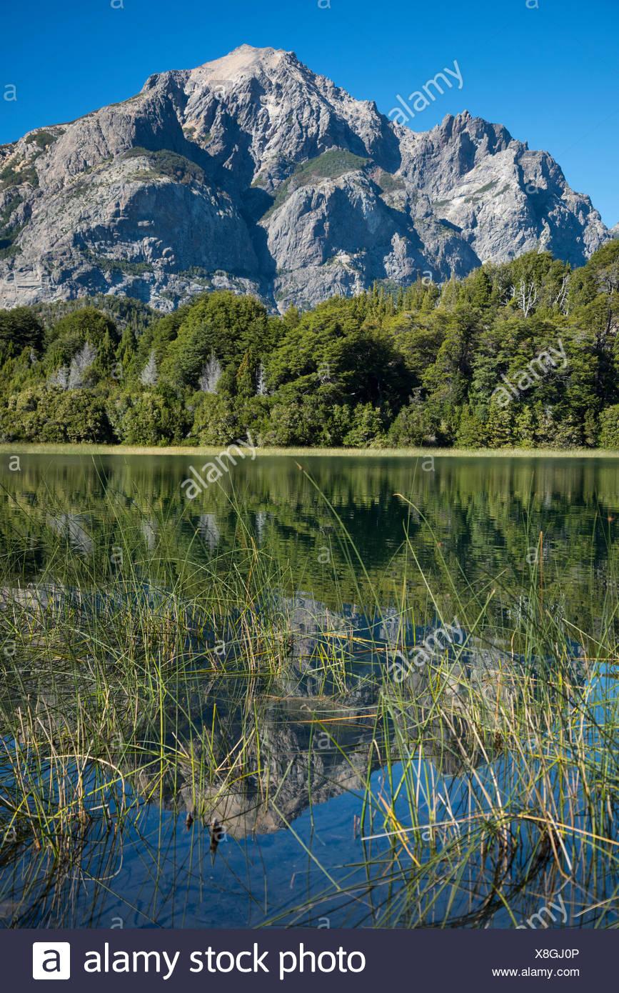 South America,Argentina,Patagonia,Rio Negro,Bariloche,Nahuel Huapi,National Park - Stock Image