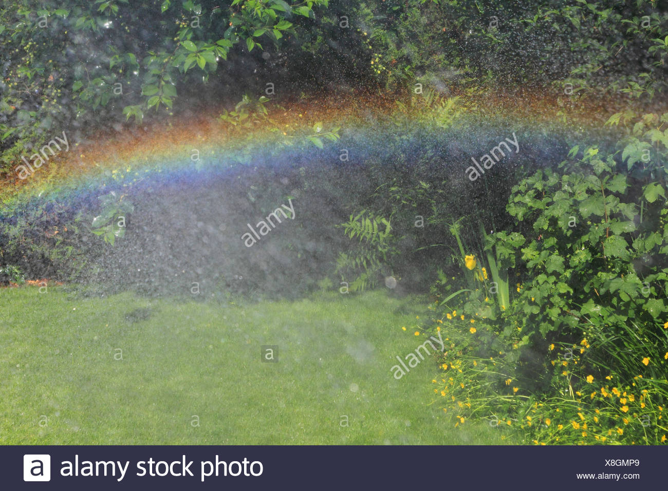 Rainbows in the garden, - Stock Image